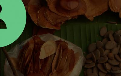 Programa de Aceleração da Plataforma Parceiros pela Amazônia (PPA) divulga negócios selecionados para a turma de 2020